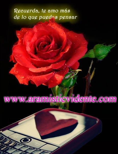 rosa-amor-aramistic